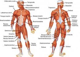 Terapeutska masaža